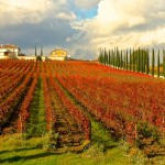 Weekend a Montefalco, fra Frantoi e Cantine