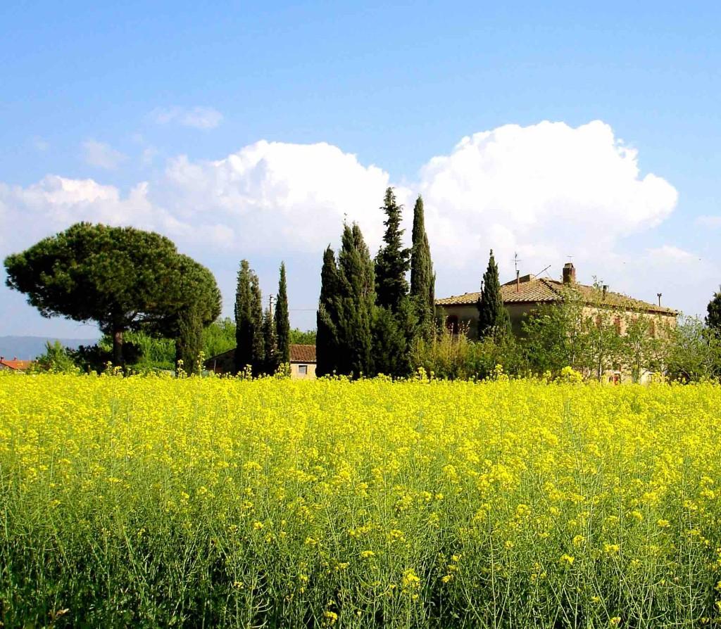 Toscana - Bolgheri 9