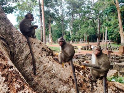 viaggio in thailandia e cambogia 27